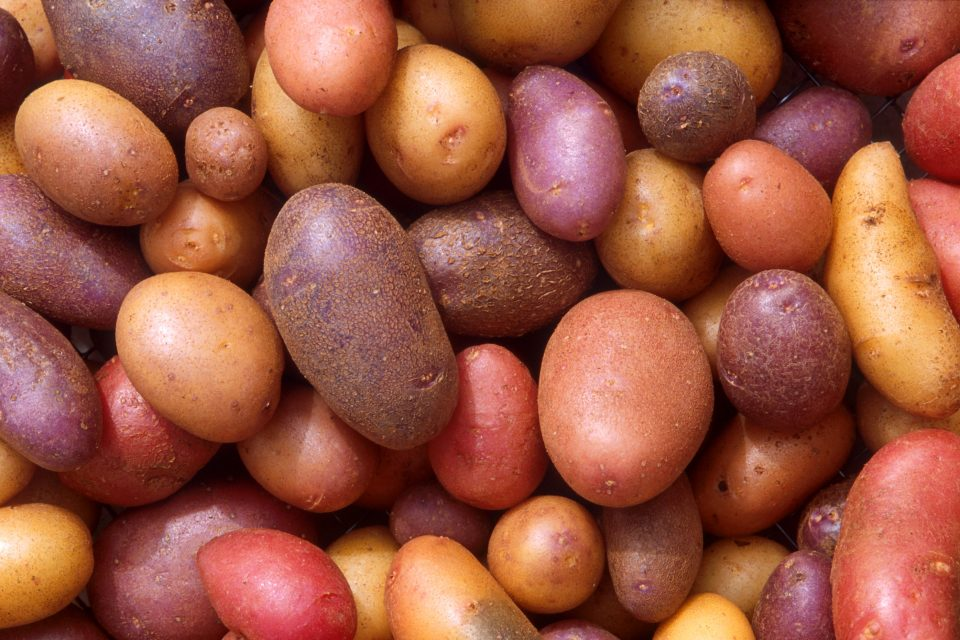 History of the Potato and 'Petata' of Leonessa
