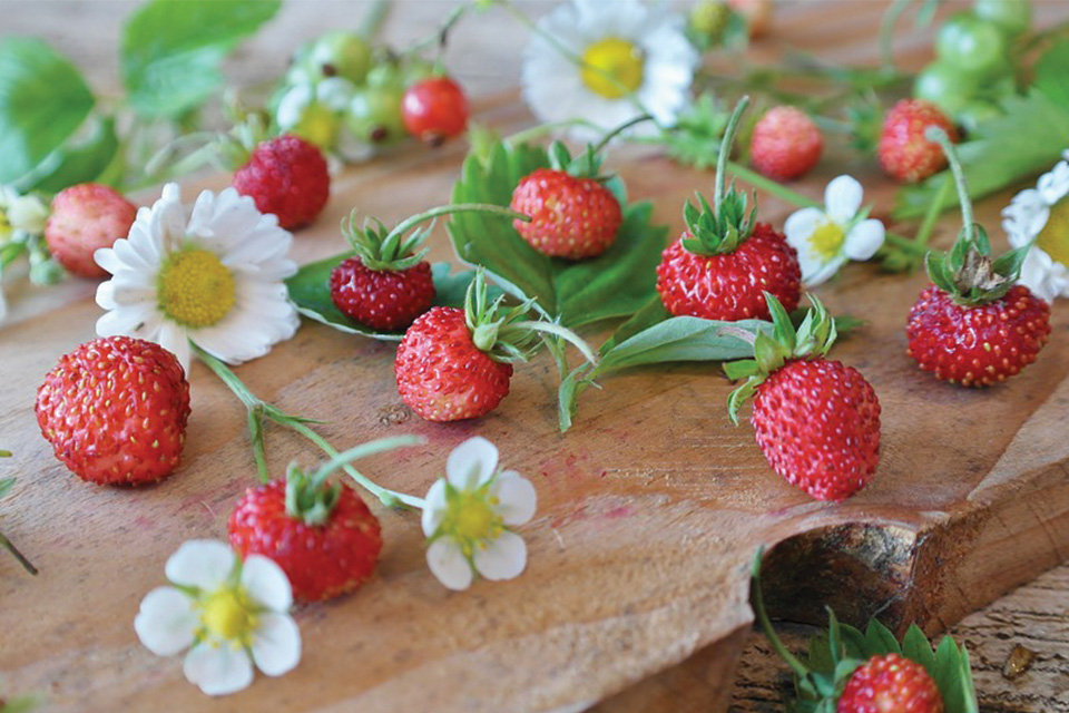 The long history of the Nemi Strawberry Festival